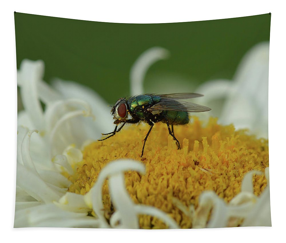 Bug Tapestry featuring the photograph Housefly On Daisy by Barbara Treaster