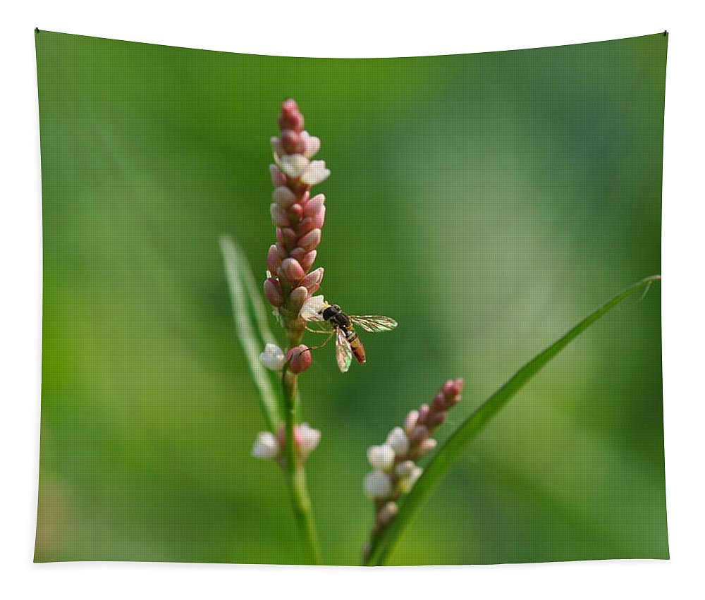 Nature Tapestry featuring the photograph Hoverfly On Flower by Barbara Treaster