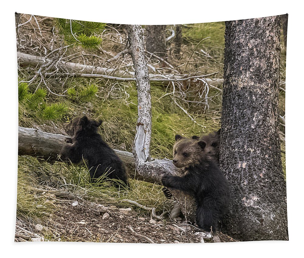Grizzlies Tapestry featuring the photograph Hugging A Tree by Yeates Photography
