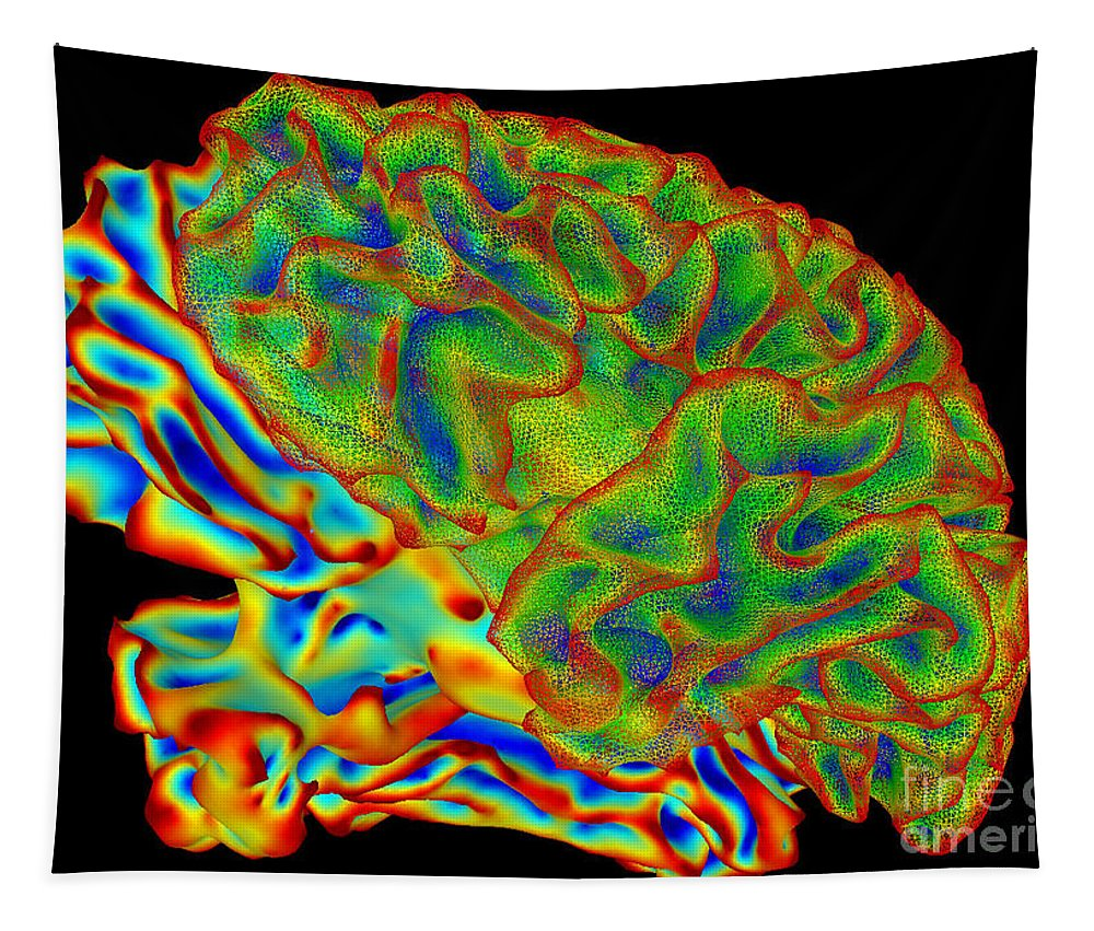 Science Tapestry featuring the photograph Human Brain, Surface Mapping by Science Source