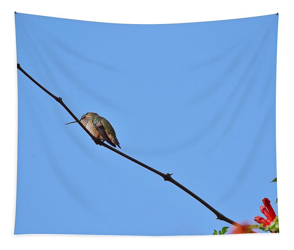 Linda Brody Tapestry featuring the photograph Hummingbird Contemplating Food II by Linda Brody