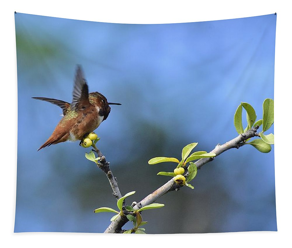 Linda Brody Tapestry featuring the photograph Hummingbird Feeling Frisky 1 by Linda Brody
