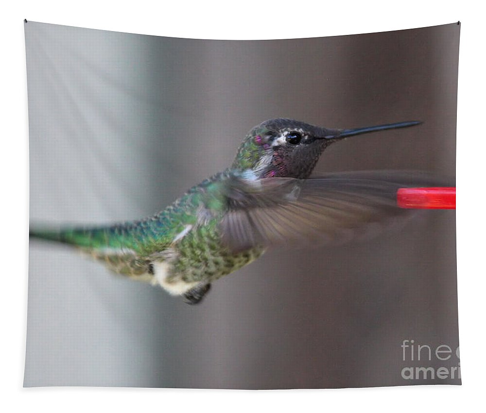 Hummingbird Tapestry featuring the photograph Hummingbird Motion by Carol Groenen