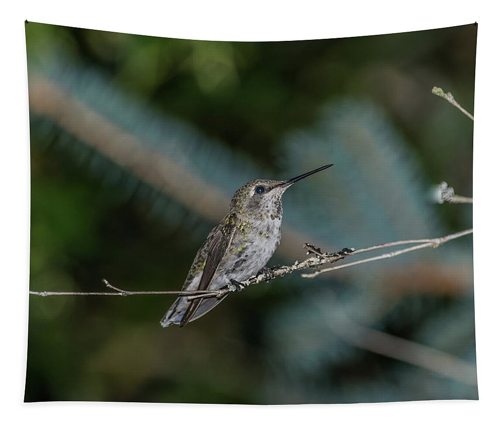 Adult Tapestry featuring the photograph Hummingbird On A Twig by Marv Vandehey