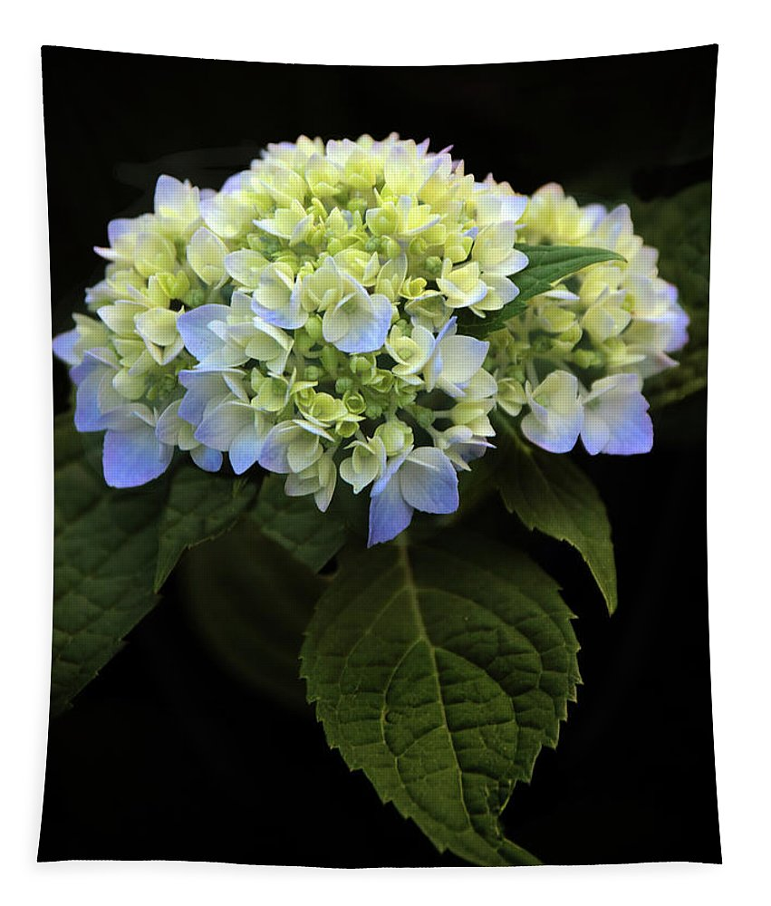 Hydrangea Tapestry featuring the photograph Hydrangea In Bloom by Jessica Jenney