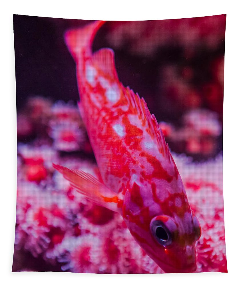 Fish Tapestry featuring the photograph I Am Sooo Hot Pink by Scott Campbell