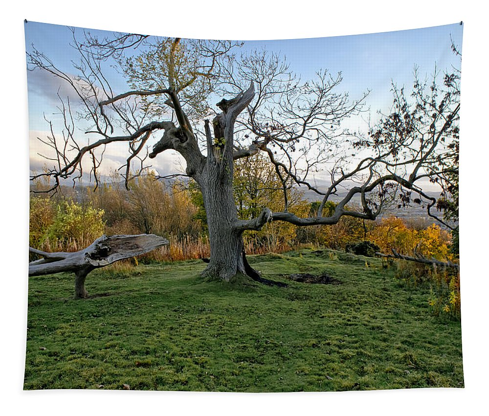 Tree Tapestry featuring the photograph I Am Such A Tree. by Elena Perelman