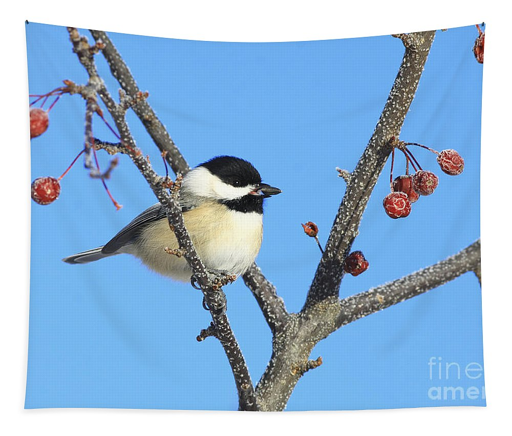 Bird Tapestry featuring the photograph I Got My Seed by Deborah Benoit