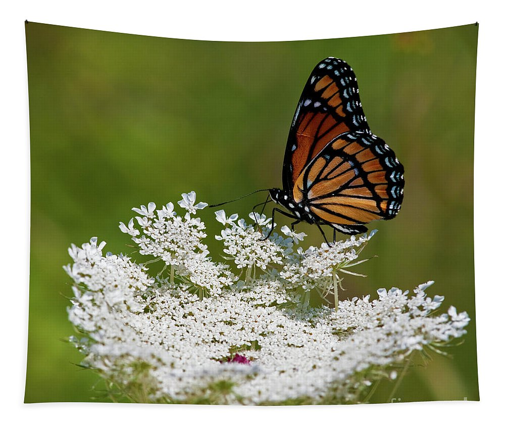 Viceroy Tapestry featuring the photograph I Love Summer.. by Nina Stavlund