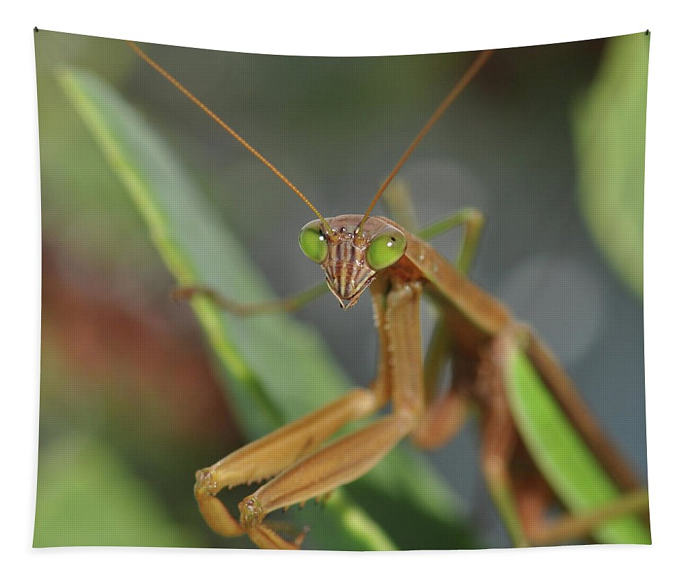 Preying Mantis Tapestry featuring the photograph I See You by Barbara Treaster