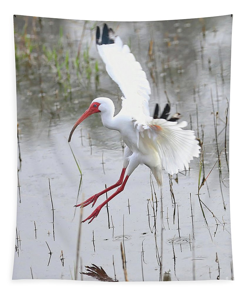 Ibis Tapestry featuring the photograph Ibis Soft Water Landing by Carol Groenen