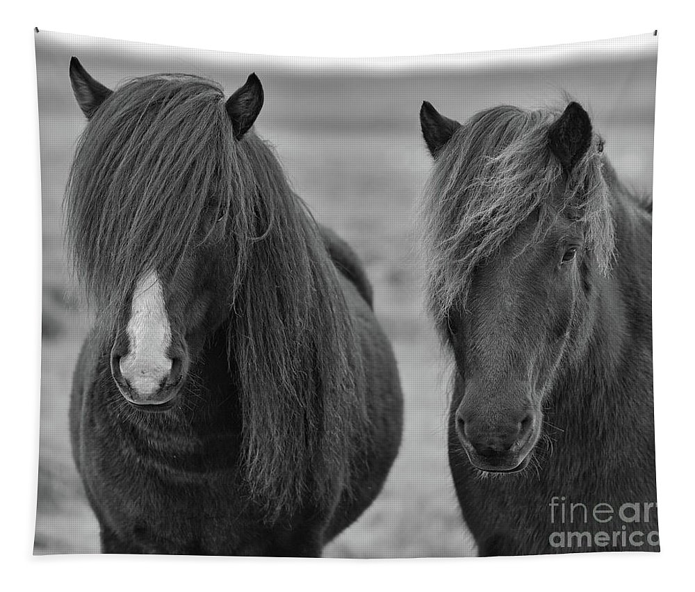 2 Tapestry featuring the photograph Icelandic Horses Duo Bw by Jerry Fornarotto