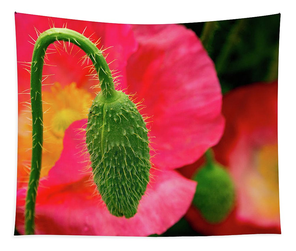 Jean Noren Tapestry featuring the photograph Icelandic Poppy Pod by Jean Noren