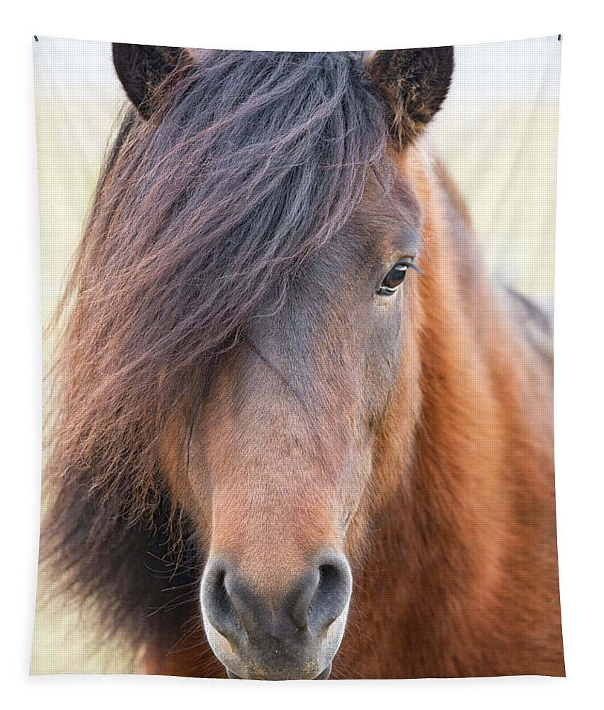 Adorable Tapestry featuring the photograph Iclelandic Horse Close Up by Jerry Fornarotto