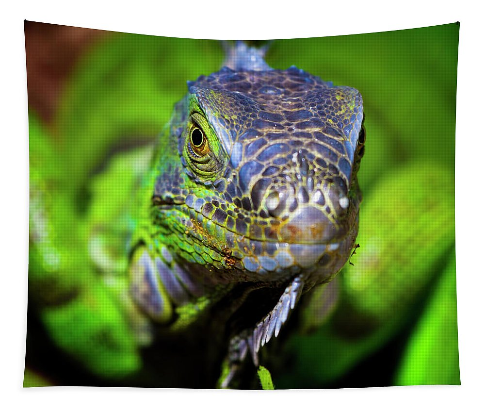 Iguana Tapestry featuring the photograph Iguana Stare by Mark Andrew Thomas