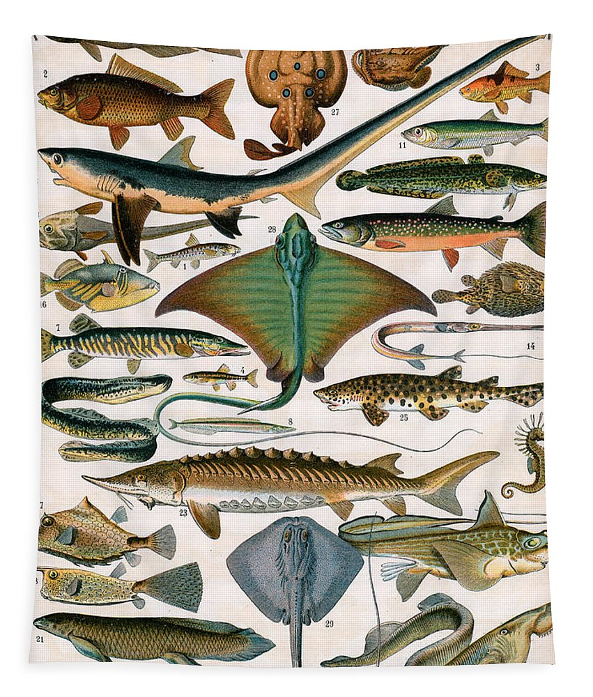 Fish Tapestry featuring the painting Illustration Of Ocean Fish by Alillot