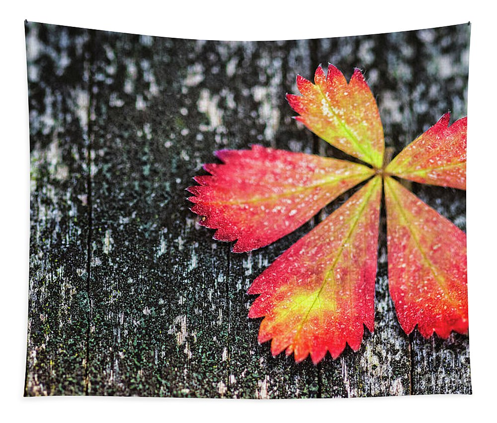 Kremsdorf Tapestry featuring the photograph Impressions Of Autumn by Evelina Kremsdorf