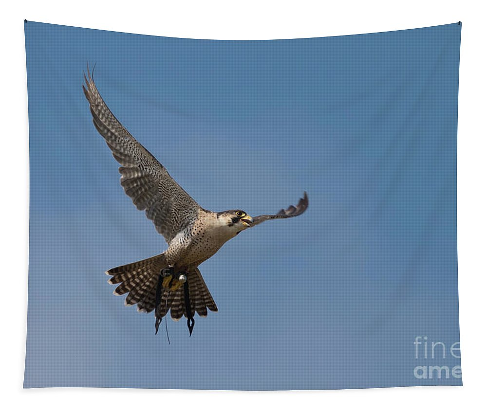 Hawk Tapestry featuring the photograph In Flight by Terri Waters