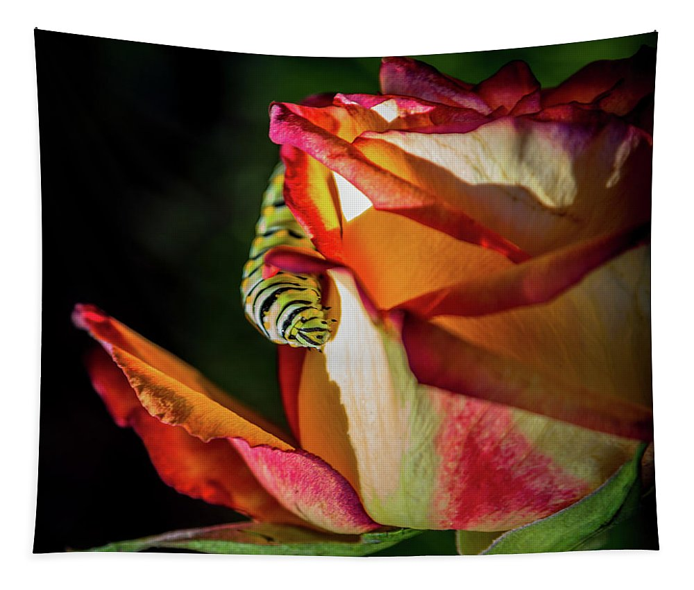 Caterpillars Tapestry featuring the photograph In The Beginning by Karen Wiles
