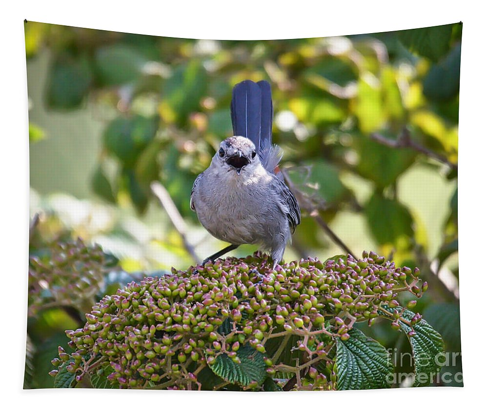 Birds Tapestry featuring the photograph In The Catbird Seat by Kerri Farley