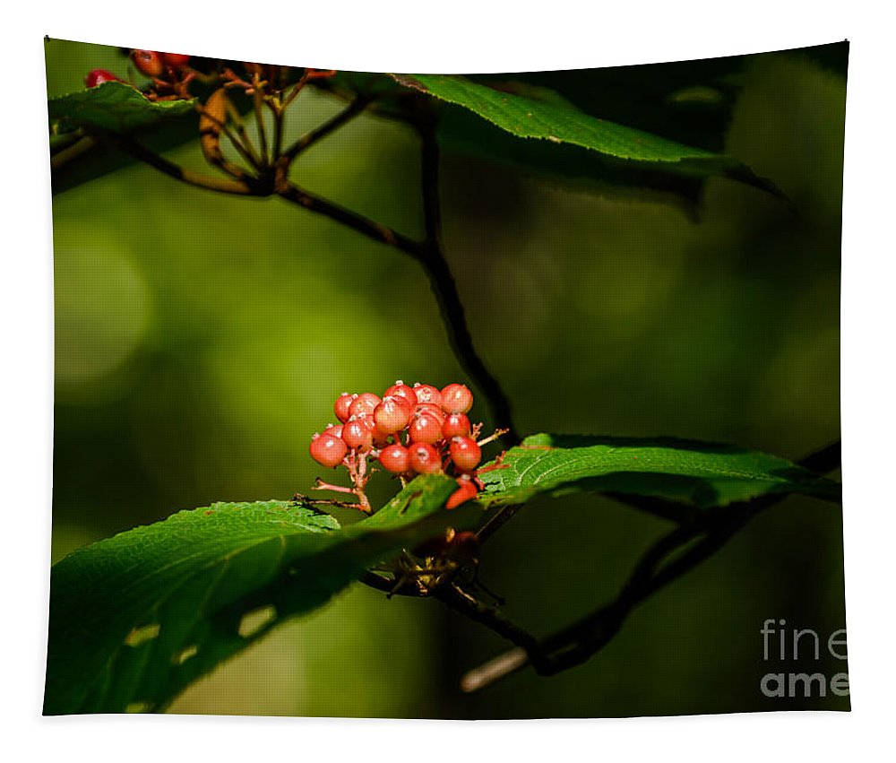 Tree Tapestry featuring the photograph Vermont---in The Wild by Sherman Perry