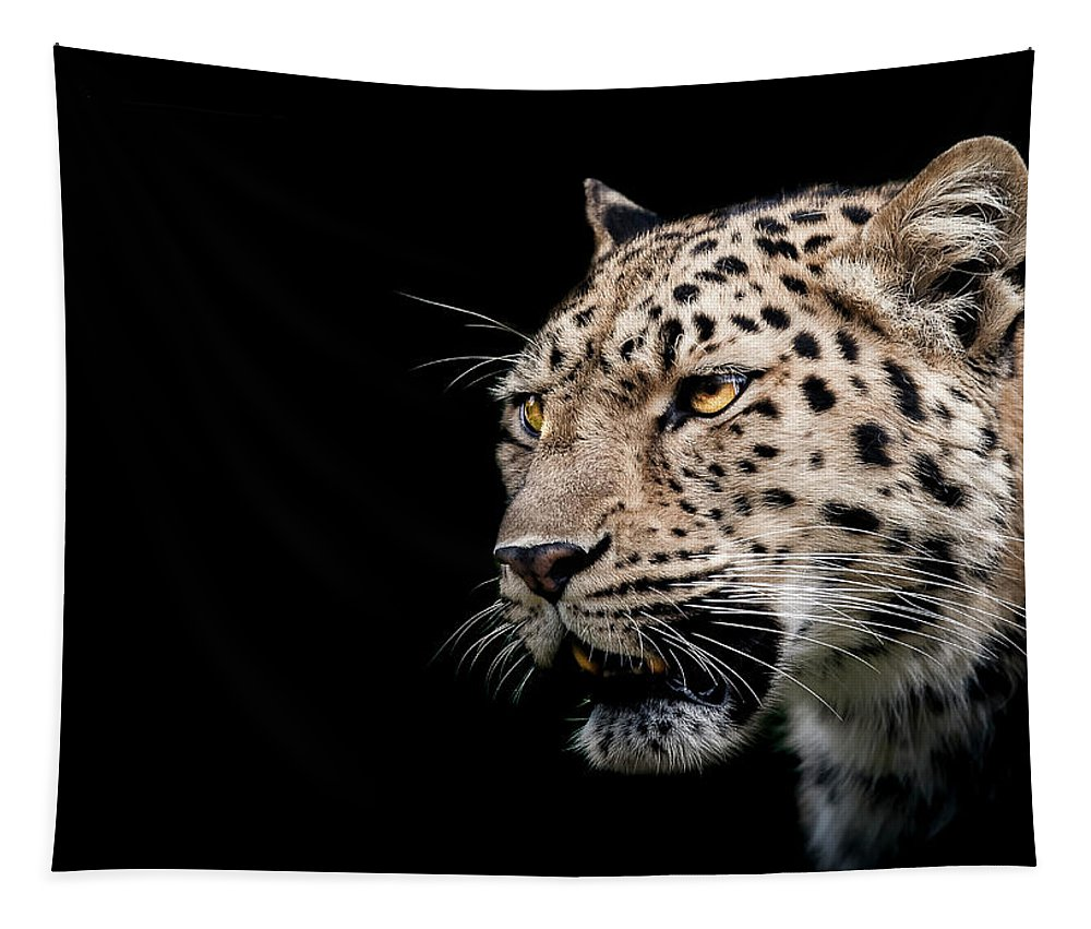 Leopard Tapestry featuring the photograph Inner Strength by Paul Neville