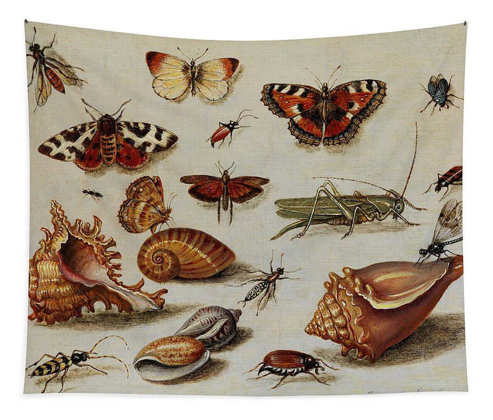 Jan Tapestry featuring the painting Insects, Shells And Butterflies by Jan van Kessel