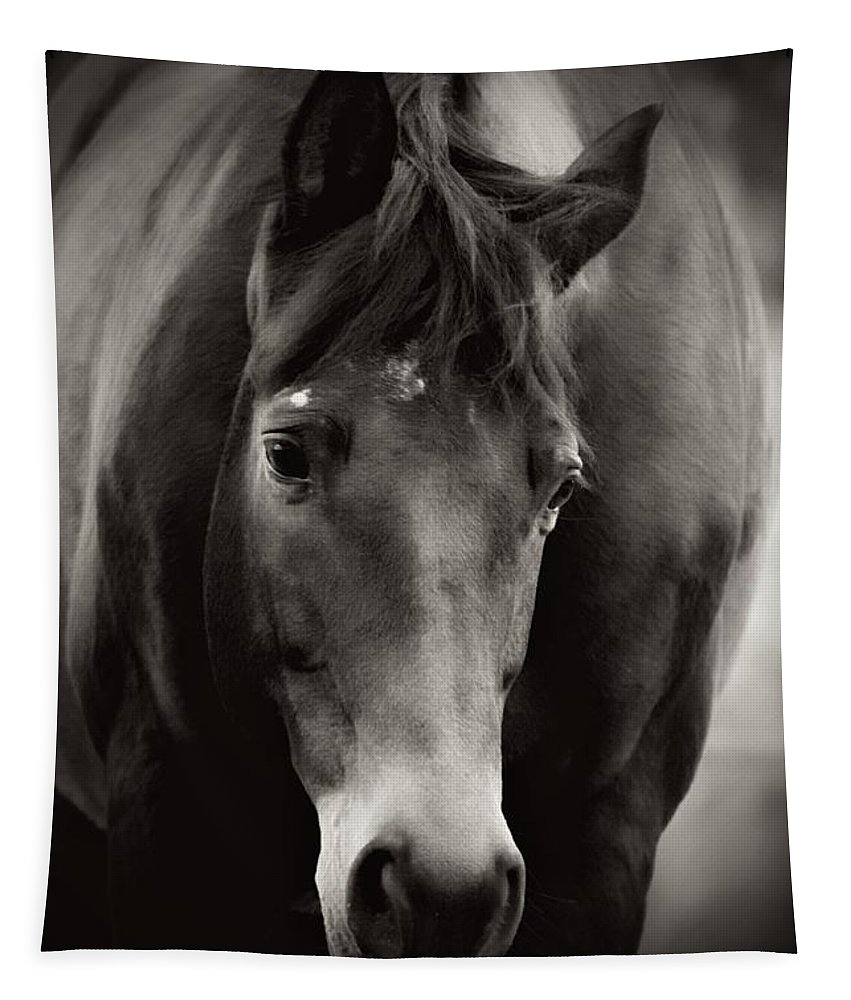 Trakehner Tapestry featuring the photograph Intelligence by Clare Bevan