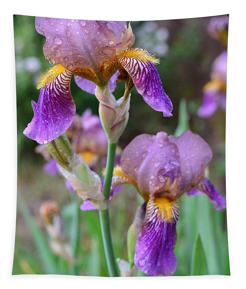 Iris Tapestry featuring the photograph Iris by Colleen Phaedra