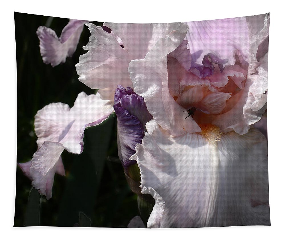 Flower Tapestry featuring the photograph Iris Lace by Steve Karol