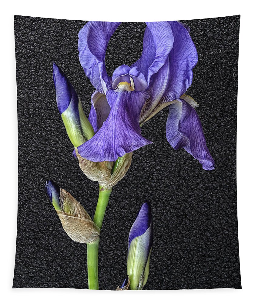 Iris On Black Leather Tapestry featuring the photograph Iris On Black Leather by Wes and Dotty Weber