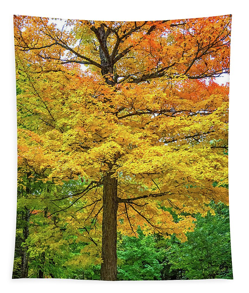 Ontario Tapestry featuring the photograph It You've Got It, Flaunt It by Steve Harrington