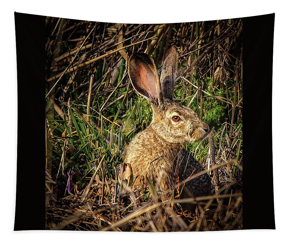 Jean Noren Tapestry featuring the photograph Jack Rabbit by Jean Noren