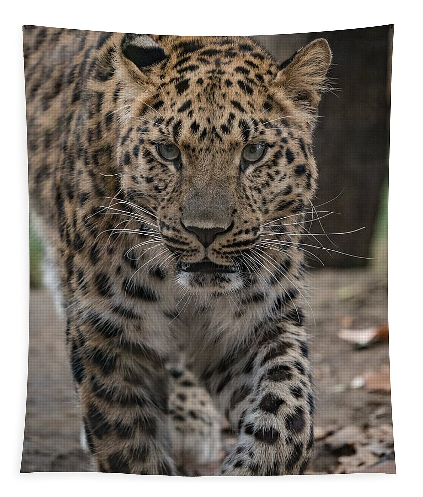 Jaguar Tapestry featuring the photograph Jaguar On The Prowl by Dave Kinsey