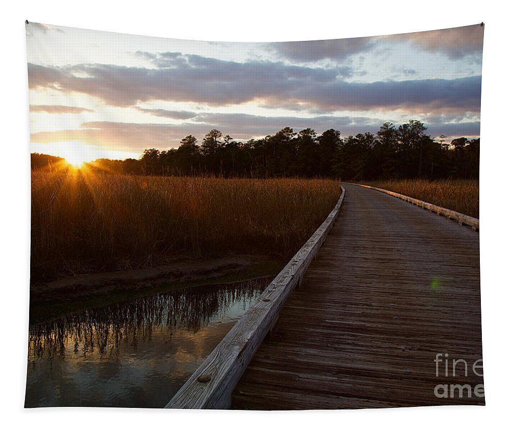 Jamestown Island Tapestry featuring the photograph Jamestown Forest Loop Sunset by Rachel Morrison