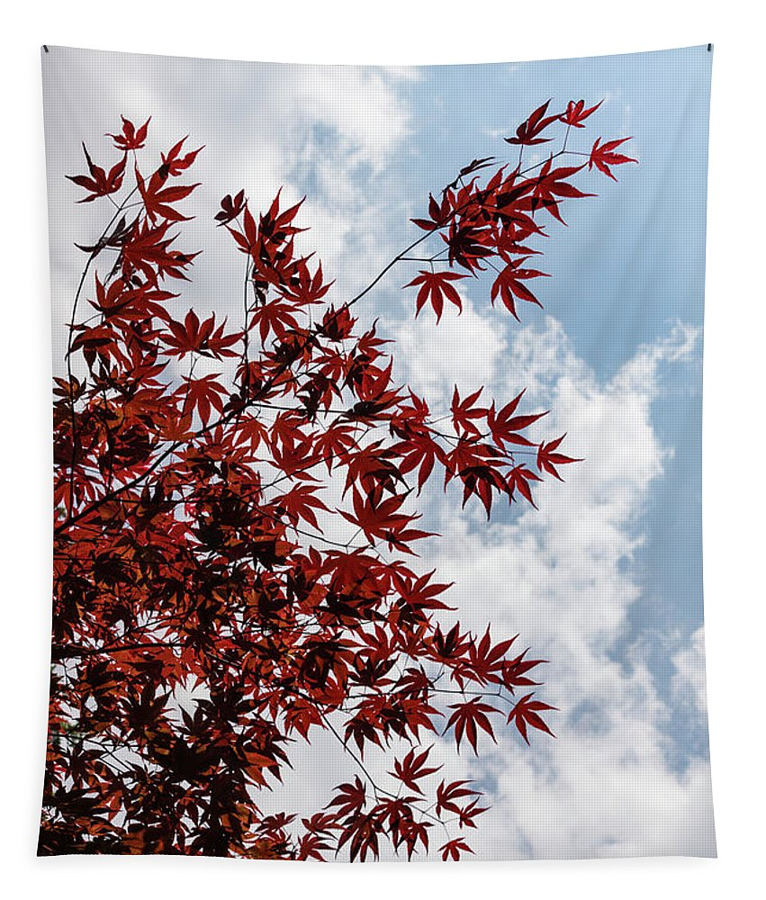 Georgia Mizuleva Tapestry featuring the photograph Japanese Maple Red Lace - Vertical Up Right by Georgia Mizuleva