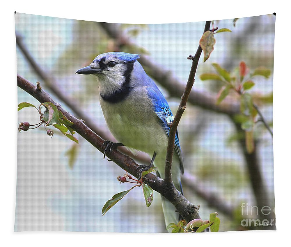 Bluejay Tapestry featuring the photograph Jay In June by Deborah Benoit