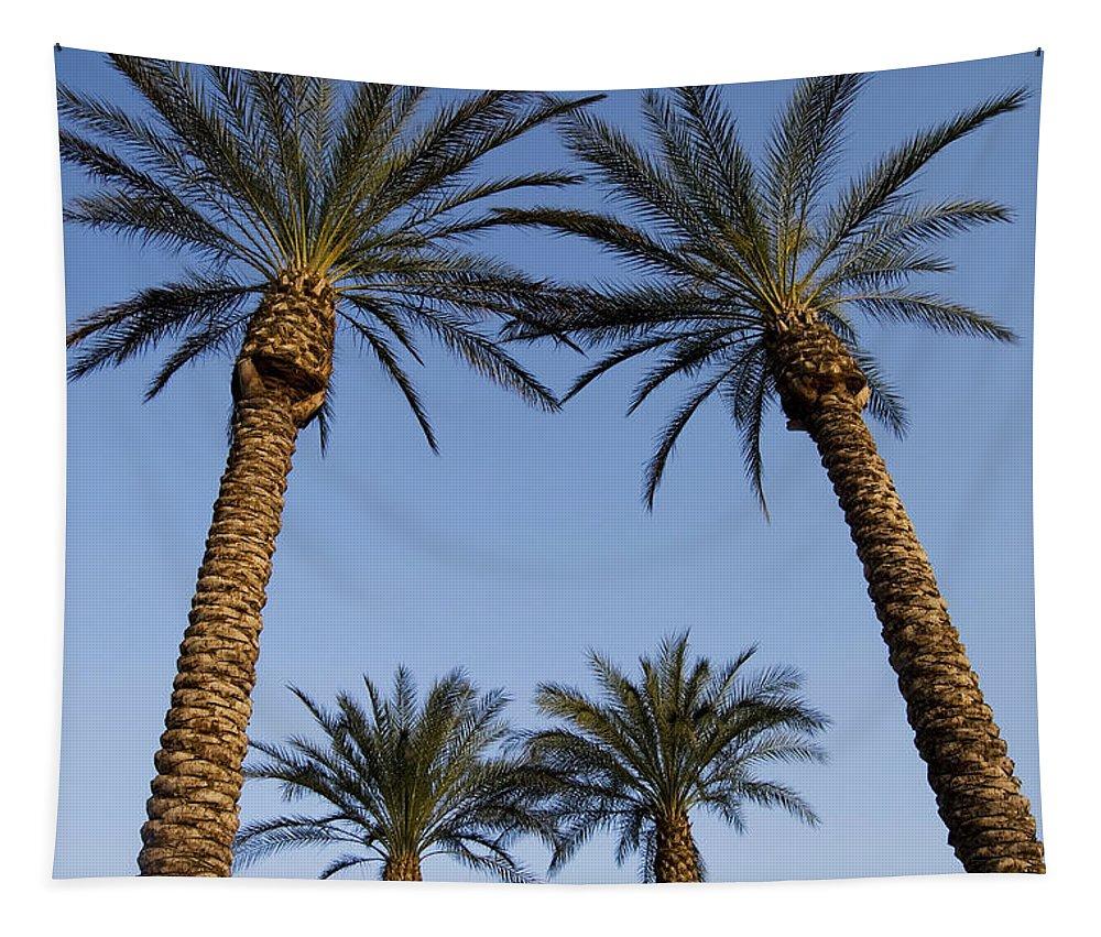 PlantFloraLeavesBotanyBotanicalNatureBeautyDelicatePrettyCloseupDetailMacroPalmTreeTropicalJerusalemIsrael Tapestry featuring the photograph Jerusalem Palms by Mary Lane