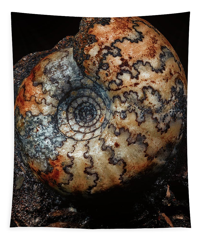 Macro Tapestry featuring the photograph Jurassic Ammonite by Robert Storost
