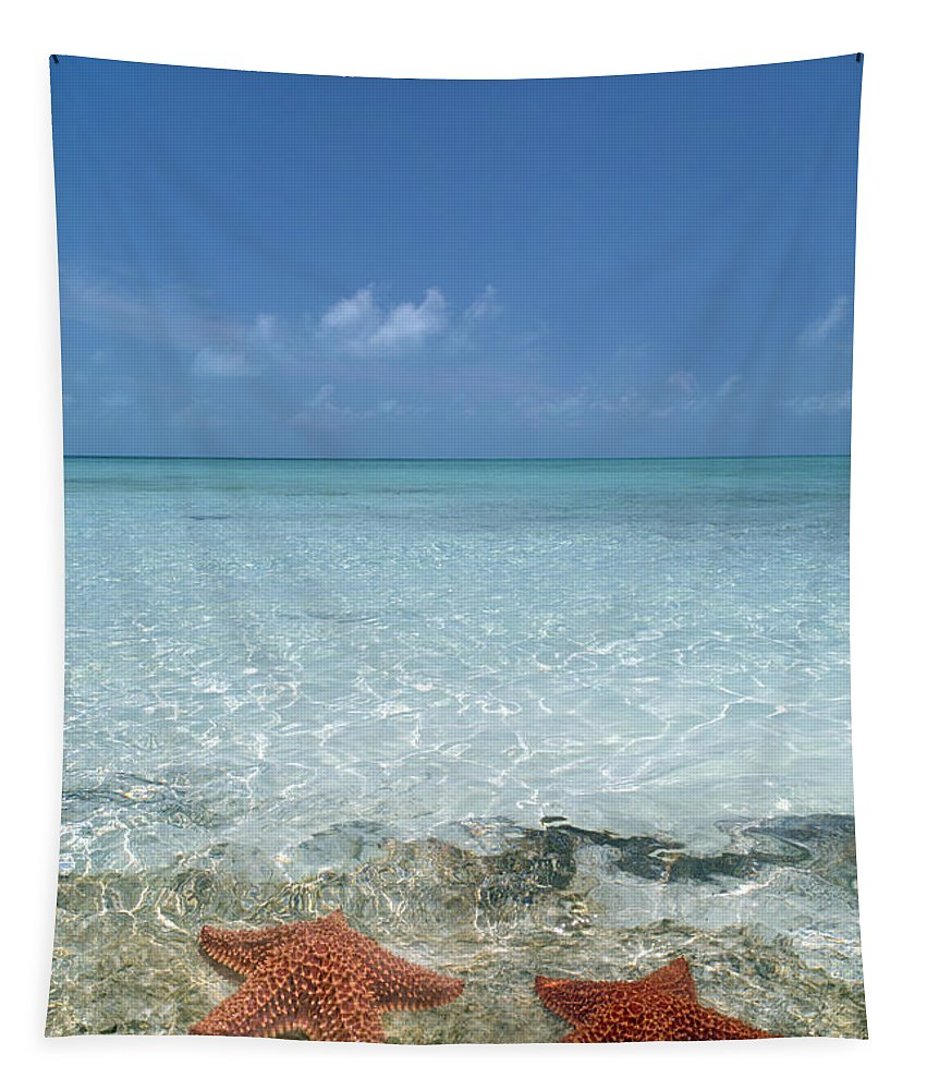 Starfish Tapestry featuring the photograph Just Between Us by Betsy Knapp