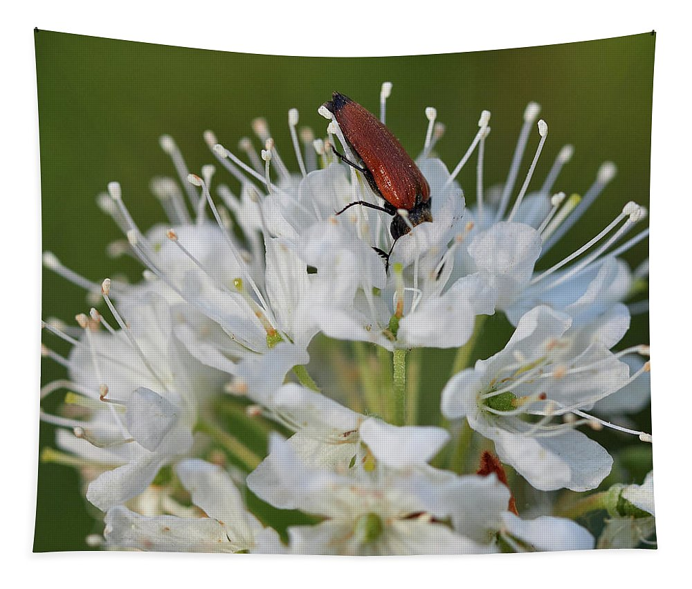Finland Tapestry featuring the photograph Just Having A Lunch. Marsh Labrador Tea by Jouko Lehto