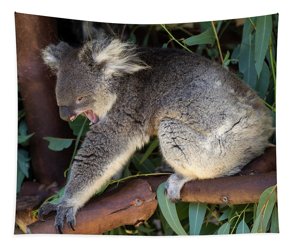 Koala Tapestry featuring the photograph Just So Tired by Tania Read