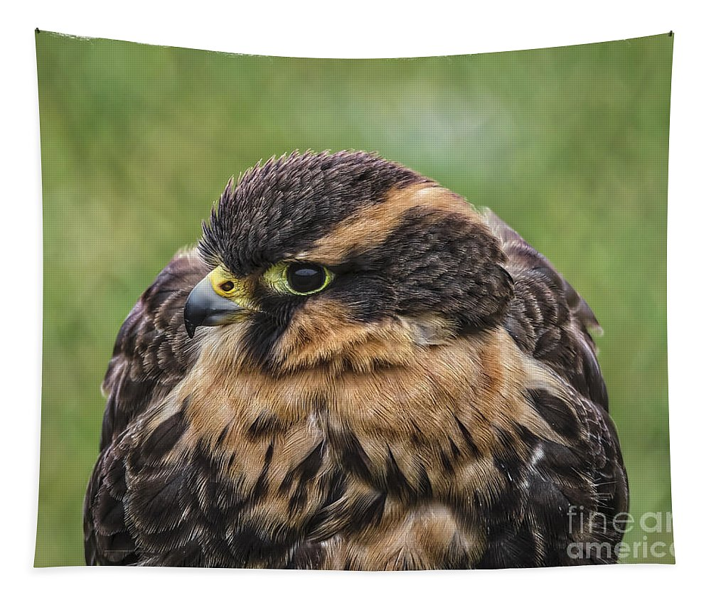 Juvenile Aplomado Falcon Tapestry featuring the photograph Juvenile Aplomado Falcon by Mitch Shindelbower