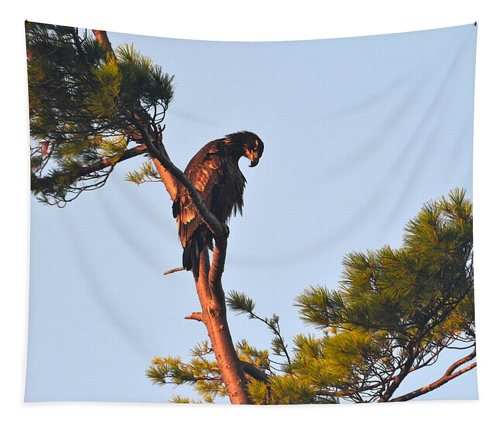 Bald Eagle Tapestry featuring the photograph Juvenile Bald Eagle by Colleen Phaedra