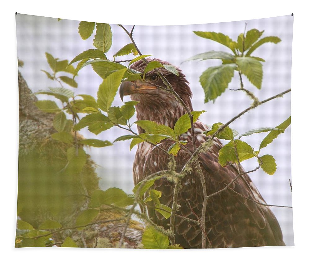 Juvenile Bald Eagle In Leaves Tapestry featuring the photograph Juvenile Bald Eagle In Leaves by Dan Sproul
