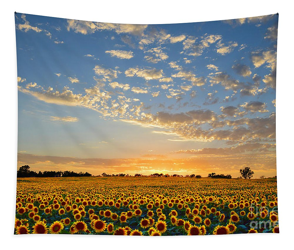 Sunflowers Tapestry featuring the photograph Kansas Sunflowers At Sunset by Catherine Sherman