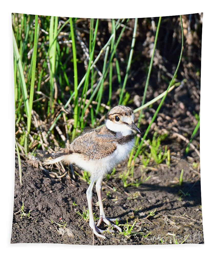 Killdeer Tapestry featuring the photograph Killdeer Chick by Brad Christensen