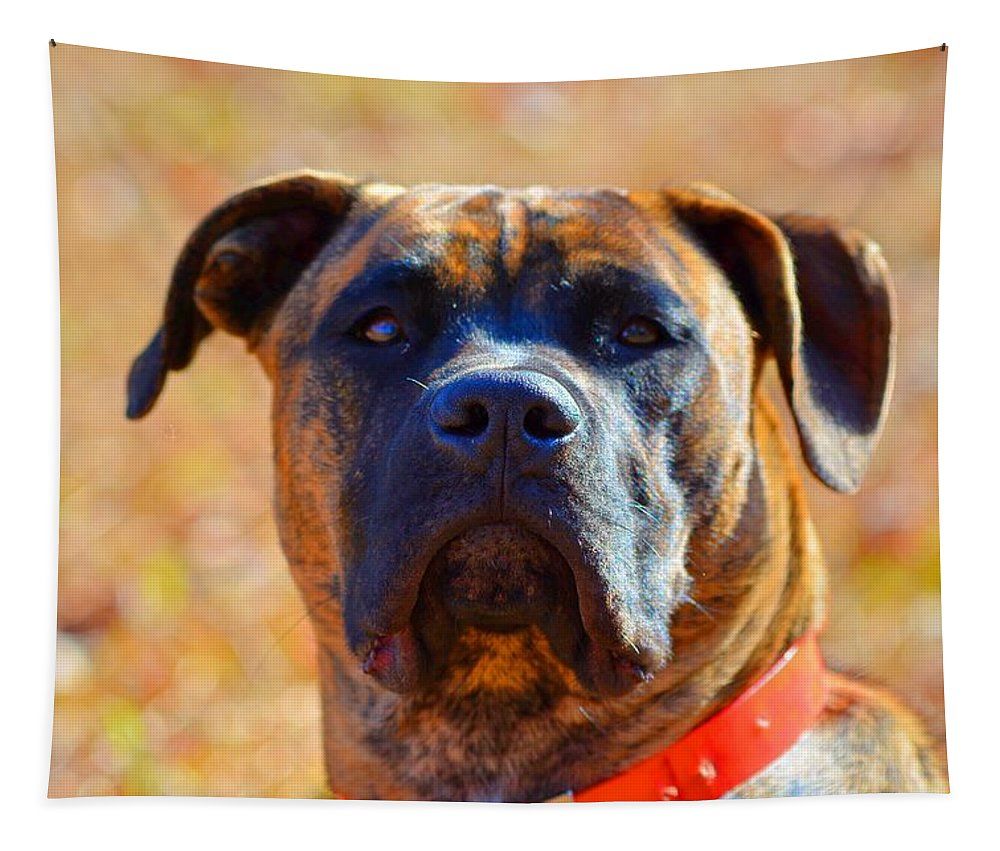 King Of My Home Tapestry featuring the photograph King Of My Home by Lisa Wooten
