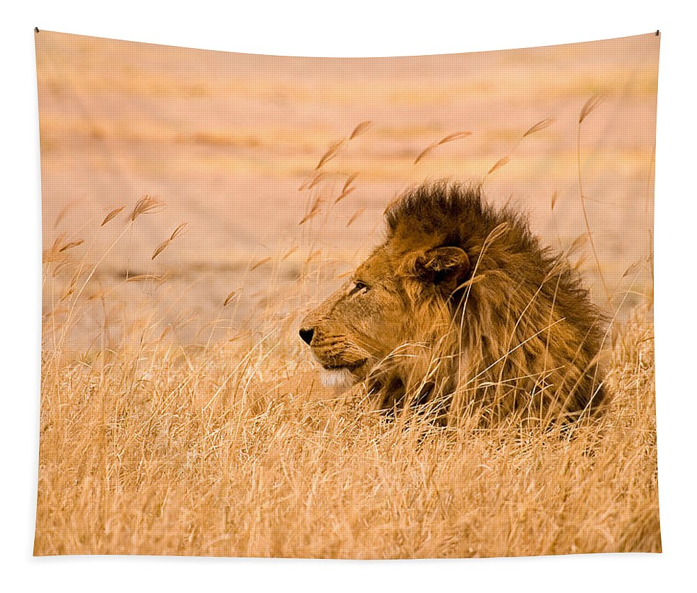 3scape Tapestry featuring the photograph King Of The Pride by Adam Romanowicz