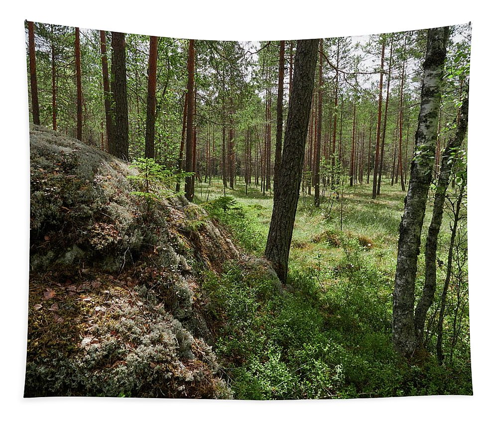 Finland Tapestry featuring the photograph Kintulammi Forest by Jouko Lehto